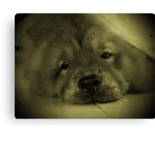 Do I look like a seal pup? Canvas Print