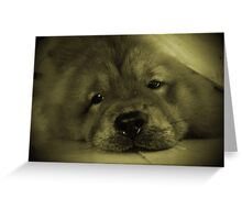 Do I look like a seal pup? Greeting Card