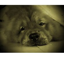 Do I look like a seal pup? Photographic Print