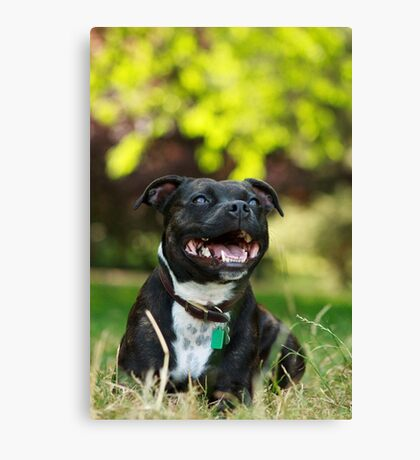 The Staffie Smile Canvas Print