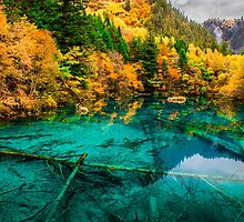 Autumn in Five-flower Lake, Jiuzhaigou (036)  by Daniel H Chui