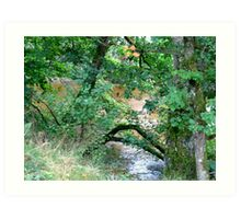 River Valley - The River Bank Art Print
