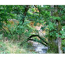 River Valley - The River Bank Photographic Print