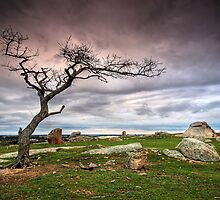 Dog Rocks Tree by Annette Blattman