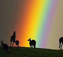 Kangaroos and Rainbow at Kangaroo Ground, Yarra Valley. by Ern Mainka