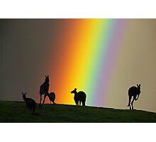 Kangaroos and Rainbow at Kangaroo Ground, Yarra Valley. Photographic Print