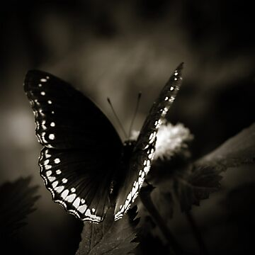 Butterfly by Damienne Bingham