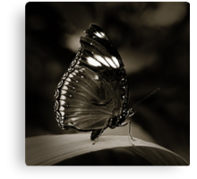 Butterfly V Canvas Print