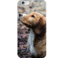 Spaniel Pup iPhone Case/Skin