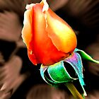 """""""'Tis the Last  Rose of  Summer."""" by Phil Thomson IPA"""