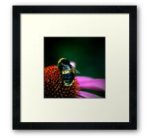 Buzz III Framed Print