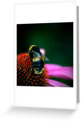 Buzz III by Damienne Bingham