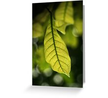 Colour Of Life XV Greeting Card