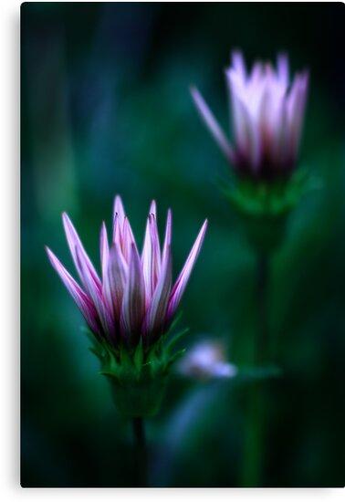Colour Of Life XVI [Print & iPad Case] by Damienne Bingham