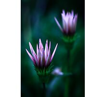 Colour Of Life XVI [Print & iPad Case] Photographic Print