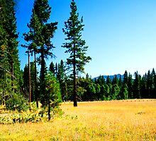Fallen Leaf Meadow 2 by Nancy Stafford