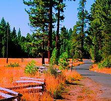 Fallen Leaf Road by Nancy Stafford