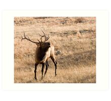 Can You Feel The Rut? Art Print