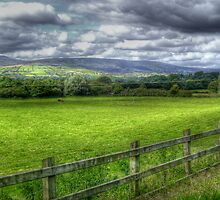 Field - Draperstown, Co. Derry by Kieran Donnelly