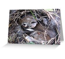 Baby Bunnies in Nest Greeting Card