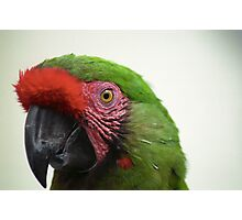 Military Macaw Photographic Print