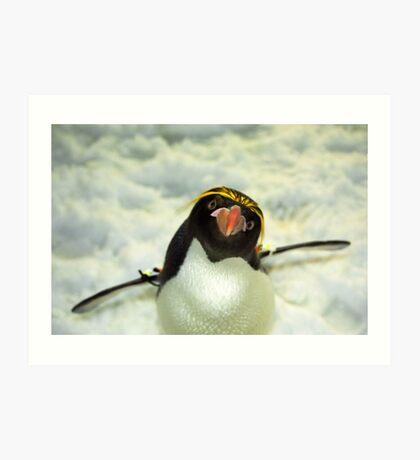 Macaroni Penguin Art Print