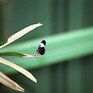 Little Butterfly by Kristin Hamm
