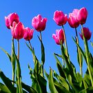 Tulips in the Sky.. by Eugenio