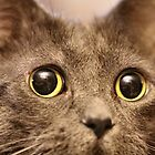 Mims up close and purrsonal by Keala