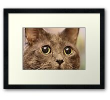 Mims up close and purrsonal Framed Print