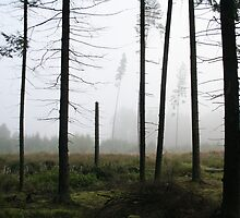 Fog (My forest) by Antanas
