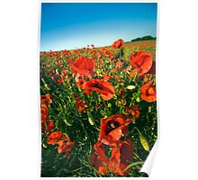 Lincolnshire poppies Poster