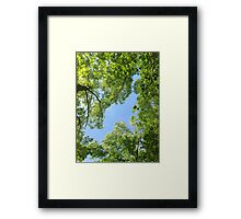 In The Arms Of The Forest Framed Print