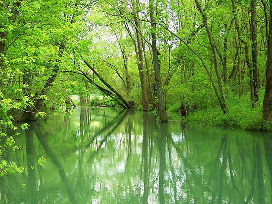 Spring Green Reflections by NatureGreeting Cards ©ccwri