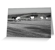 4 Goats Greeting Card