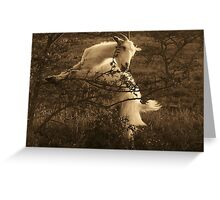 Goat eating thorn-tree leaves Greeting Card