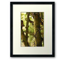 Nature's Armour - Sentosa Island, Singapore Framed Print