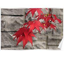Japanese Maple - Porltand, Oregon Poster