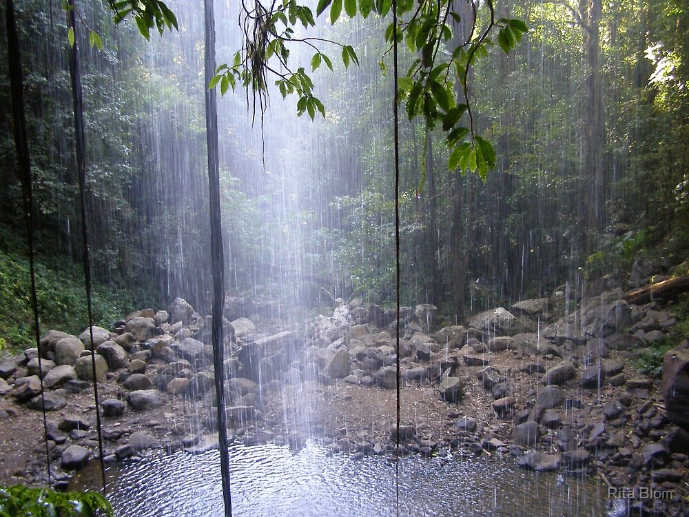 'Rainforest' Looking through Crystal Falls, Dorrigo N.S.W. by Rita Blom