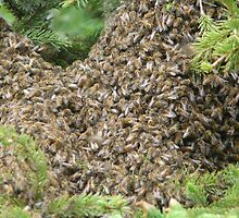 A Swarm of  Honey Bees  by MaeBelle