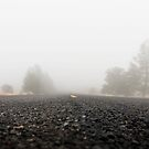 Homecoming. From the fog of war to the fog of life.  by Alex Preiss
