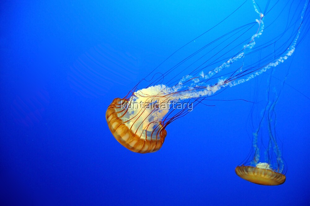 Jellyfish by kuntaldaftary