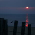 Dewey Beach Sunrise by Lori Deiter