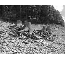 Stumps Photographic Print