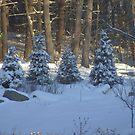 Snowy Sunrise by wldman68