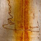 Scribbly Gum Bark by Werner Padarin