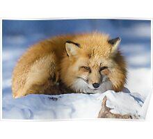 Foxy Redhead Poster