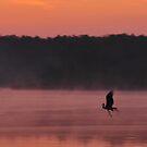 Morning Glory by NicoleBPhotos