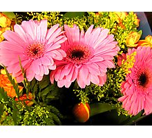 Pretty Pretty Pink Fowers  Photographic Print