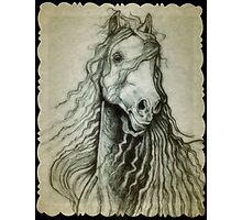 Beautiful horse drawing Photographic Print